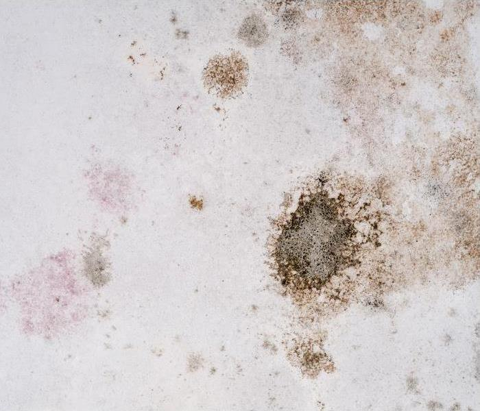 Commercial If You Discover Mold In Your Santa Ana Commercial Property Call Our Team Of Professionals Immediately!