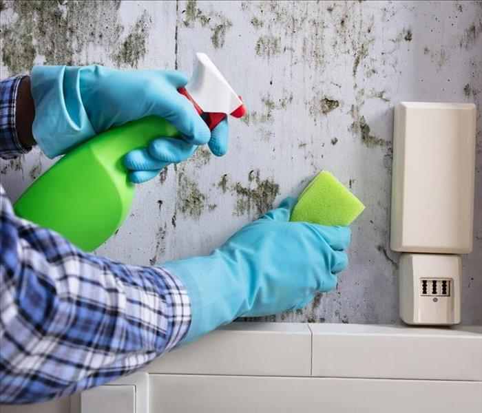 Mold Remediation Common Myths About Mold Growth In Your Santa Ana Home